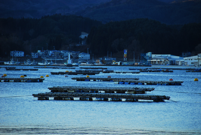 岩手県山田町 牡蠣棚